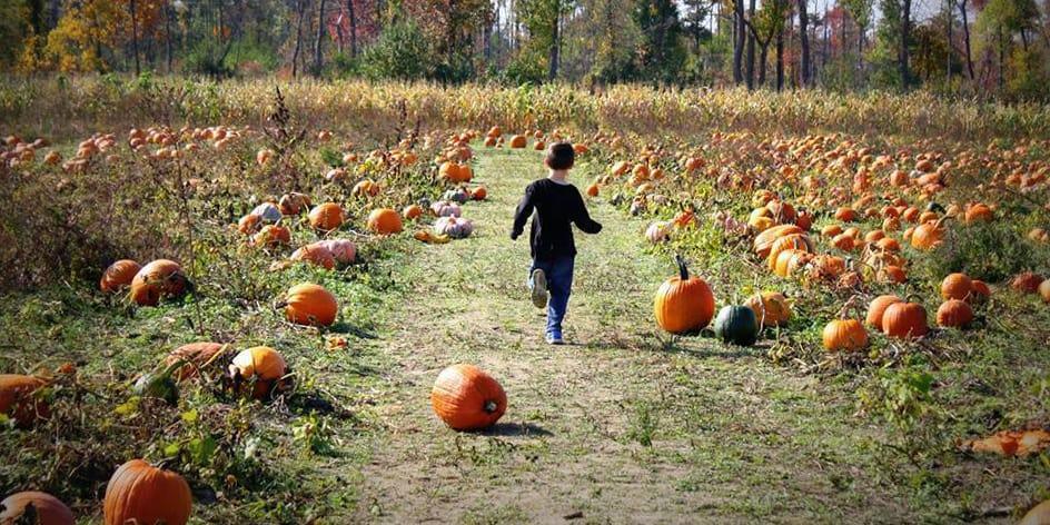 Fall Harvest Weekends
