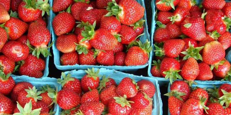 Strawberry Picking Hayrides